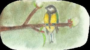 oiseaudesanges